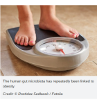 """Gut Bacteria Affect Our Metabolism"" - Science Daily"