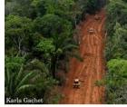 """Global Habitat Loss Still Rampant Across Much Of The Earth"" - Wildlife Conservation Society"