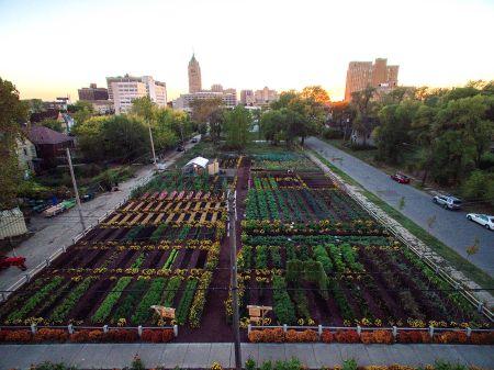 michigan-urban-farming-initiative-garden