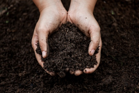 Soil in hand for planting